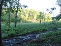 Calvert Cliffs State Park - Lusby, Maryland (14817189343).jpg
