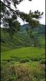 Cameron Highlands Pahang.png