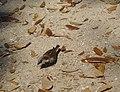 Camouflage Bird - panoramio.jpg