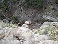 Campsite - panoramio (6).jpg