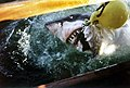 Cape Agulhas white shark JF.jpg