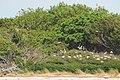 Cape Fear River - Battery Island - panoramio (2).jpg