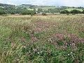 Castle Semple Wetlands, Lochwinnoch - geograph.org.uk - 523619.jpg