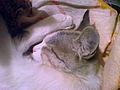 Cat - pet - white & gray 2.JPG