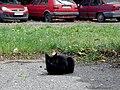 Cat E5.jpg