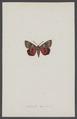 Catocala - Print - Iconographia Zoologica - Special Collections University of Amsterdam - UBAINV0274 003 06 0045.tif