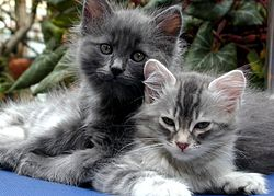 Cats Petunia and Mimosa 2004.jpg