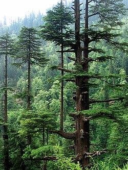 Himalaya wikipedia for Terrace meaning in hindi
