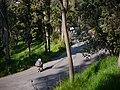 Cerro de la Estrella- longboarder on road II.jpg