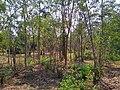 Cha-am Forest Park 2.jpg