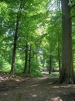 Wald von Chantilly