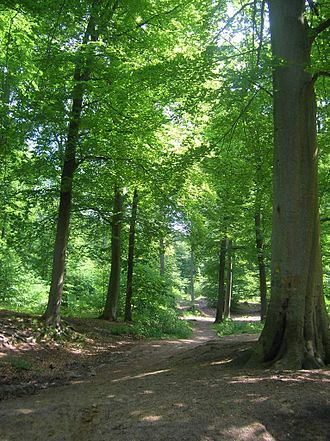 Chantilly Forest - The southern section of Chantilly Forest (Coye Forest)