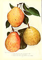 Chase fruit and flowers in natural colors (Page 16) (6237036327).jpg