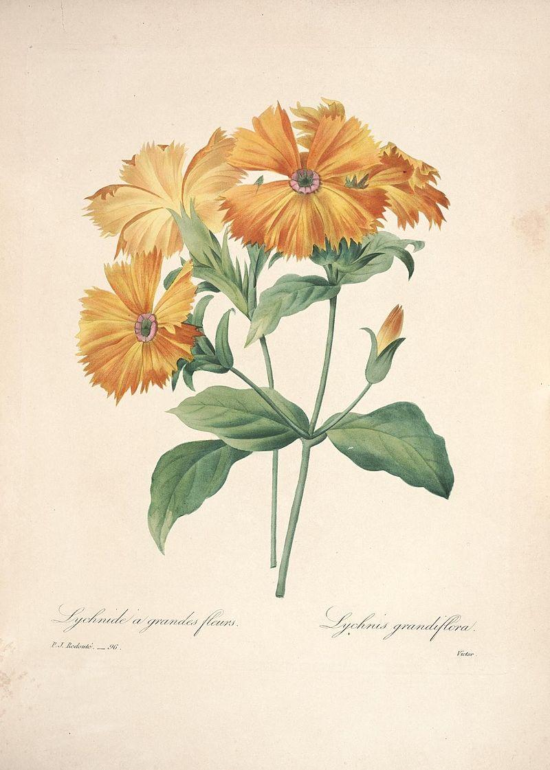 Choix des plus belles fleurs (Plate 96) (7851483838).jpg