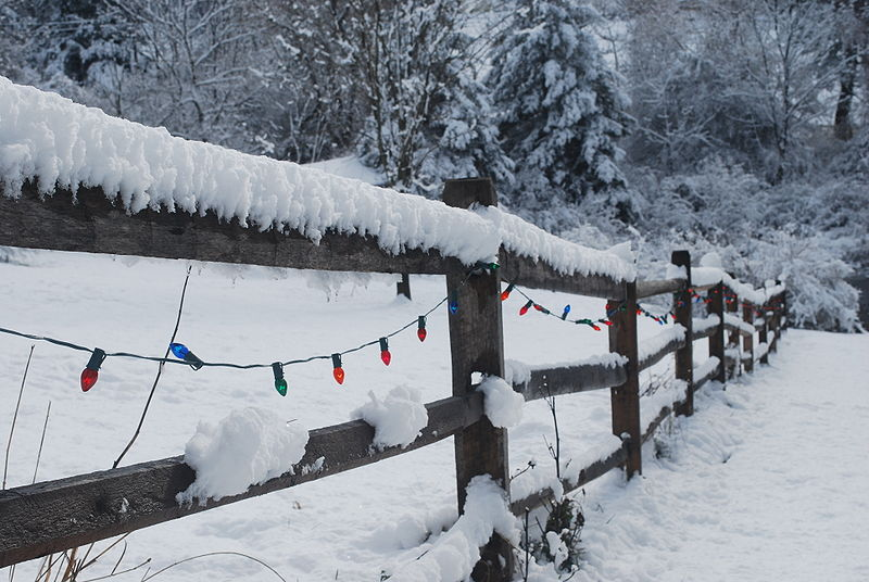 Christmas lights strung on snow-covered fence.JPG