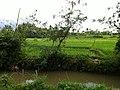 Cideres, Sukamenak, Sukaresik, Tasikmalaya, Jawa Barat, Indonesia - panoramio (13).jpg