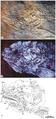Cipactlichthys scutatus IGM 6606.png