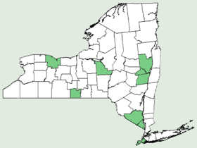 Citrullus colocynthis NY-dist-map.png