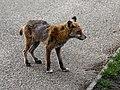 City of London Cemetery, Newham, London England - fox 04.jpg