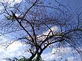Cloudy sky..in a tree.jpg
