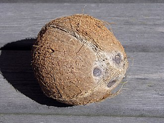 Coconut - Coconut fruit