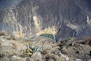 Colca Canyon - Image: Colca Oasis Stevage