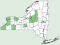 Collinsia verna NY-dist-map.png