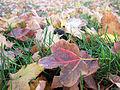 Color autumn leaves 01.jpg