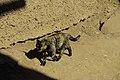 Colorful cat (11278128716).jpg