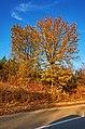 Colori d'autunno - panoramio (2).jpg