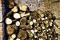 Copped Hall interior log pile, Epping, Essex, England.jpg