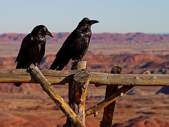 Cultural depictions of ravens - Common ravens in the Petrified Forest National Park, Arizona.