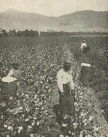 Recogida de algodón en EEUU por parte de población negra a principios del siglo XX