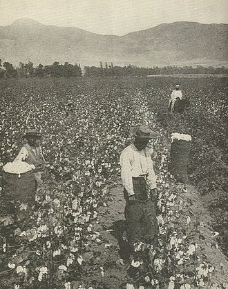 Wage slavery - African American wage workers picking cotton on a plantation in the South.