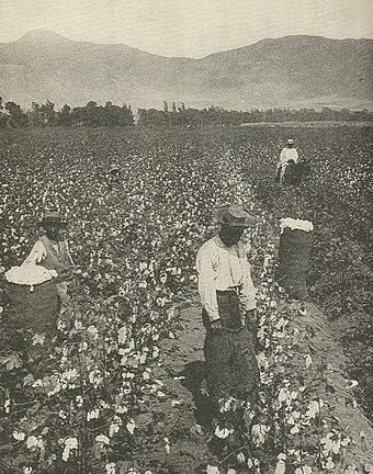 African American wage workers picking cotton on a plantation in the South CottonNegrosSouth.jpg