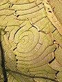 Cracked Bark - geograph.org.uk - 330523.jpg