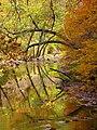 Crane-creek-fall-reflections - West Virginia - ForestWander.jpg