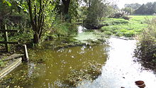 Cranham Marsh stream.JPG
