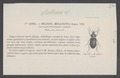 Cratocara - Print - Iconographia Zoologica - Special Collections University of Amsterdam - UBAINV0274 011 03 0009.tif