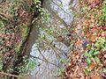 Creek at Fallon Park in Raleigh, North Carolina.jpg