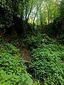 Creswell Gorge, Creswell Craggs, Notts (133).jpg
