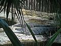 Crocodiles marins.jpg