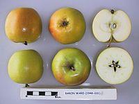 Cross section of Baron Ward, National Fruit Collection (acc. 1948-031).jpg