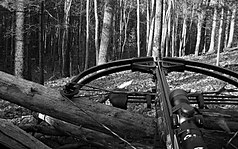 Crossbow Hunting in black and white.jpg