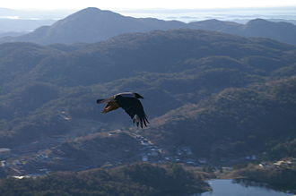 As the crow flies - A crow flying across the terrain