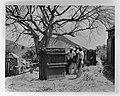 Cultivation of Hay. Landbouw op Sint-Maarten. Verwerken van suikerriet, Bestanddeelnr 935-1274.jpg