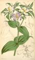 Curtis's Botanical Magazine, Plate 4340 (Volume 73, 1847).png