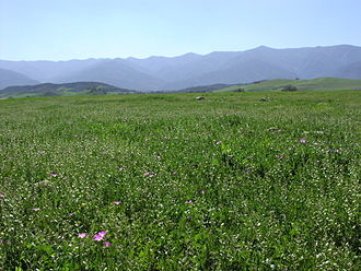 Cuyama Valley - Looking south in the Cuyama Valley towards the Sierra Madre Mountains