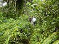 Découverte de la forêt camerounaise.jpg