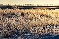 Dülmen, Hausdülmen, eisbedeckte Pflanze -- 2021 -- 5055.jpg